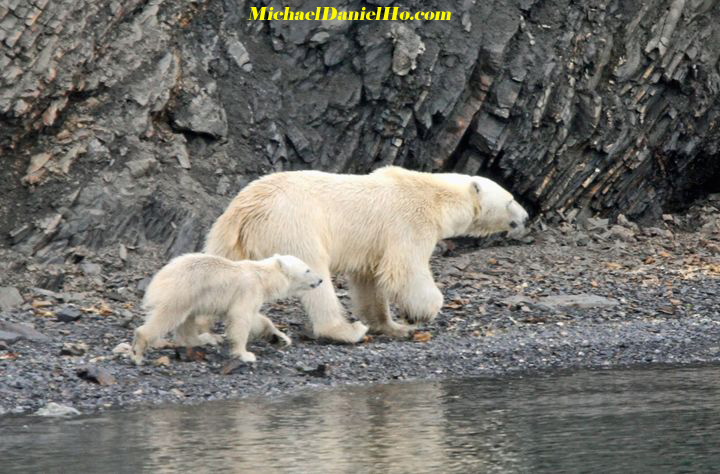 polar bear mom and cub walking on ice floes